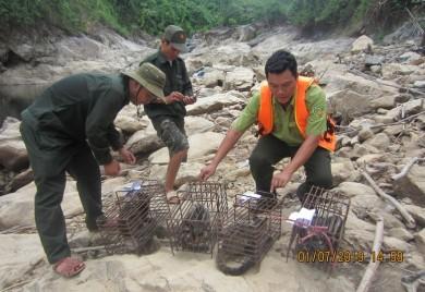 Chi cục Kiểm lâm Thừa Thiên Huế cứu hộ và thả vào rừng các loài động vật hoang dã nguy cấp, quý, hiếm