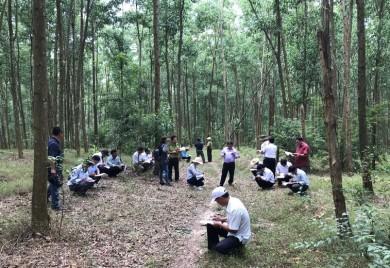 Mô hình trồng rừng thâm canh gỗ lớn tại tỉnh Thừa Thiên Huế