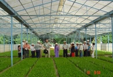 Tăng cường các biện pháp nâng cao chất lượng giống cây trồng lâm nghiệp trên địa bàn tỉnh Thừa Thiên Huế